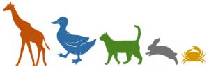 Illustration marche des animaux - cliquer ici pour ouvrir les consignes.